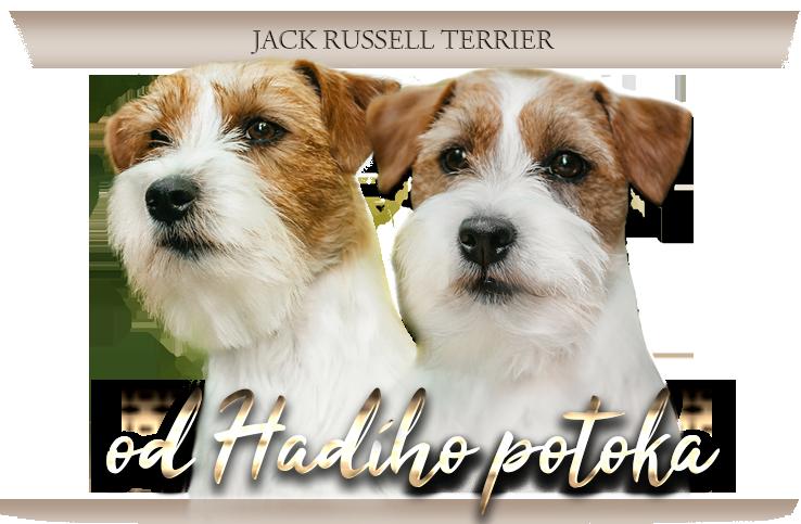 Jack Russell teriér od Hadího potoka